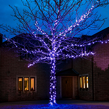 Blue outdoor Christmas tree lights