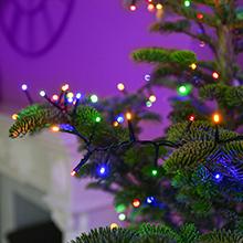 Multi Coloured Christmas tree lights