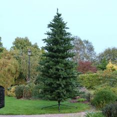12ft Outdoor Green Richmond Firl PE Christmas Tree