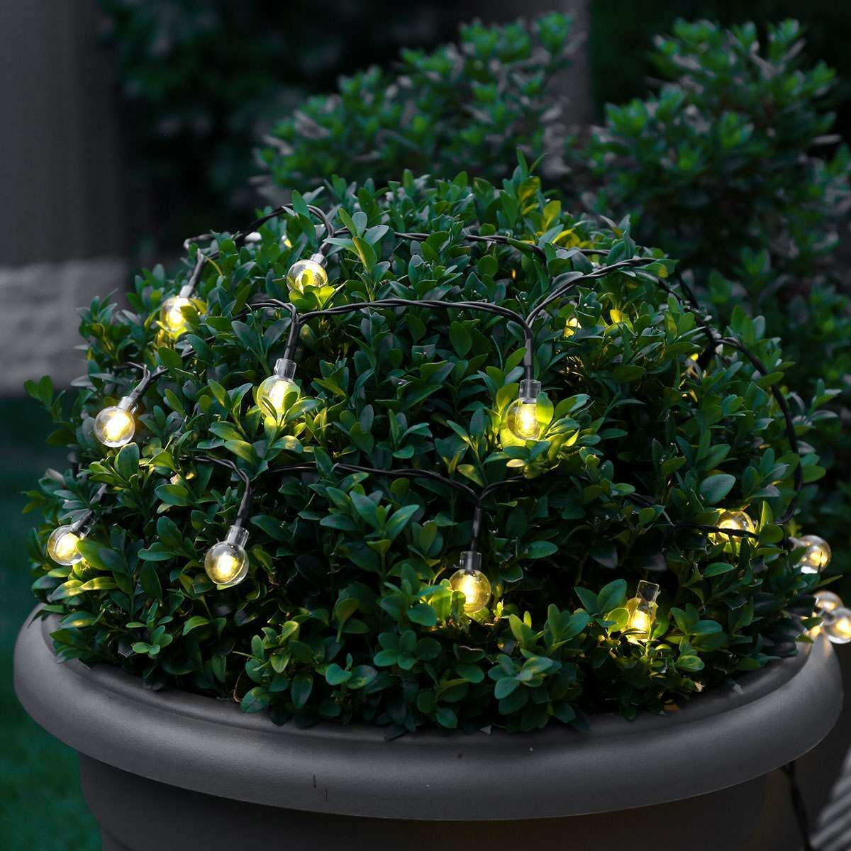 5m Outdoor Battery Clear Berry Fairy Lights, Warm White LEDs, Green Cable